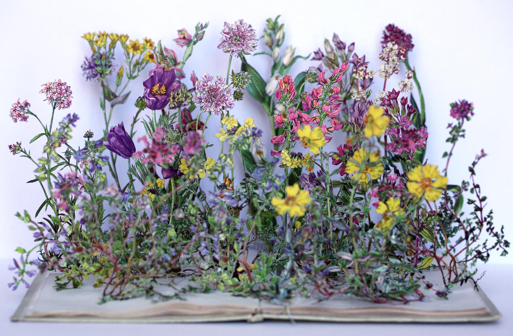 wild-flowers-chalk-2